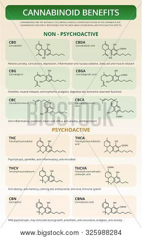 Cannabinoid Benefits Vertical Textbook Infographic Illustration About Cannabis As Herbal Alternative