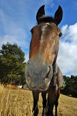 Close up of an inquisitive horse from low viewpoint. poster