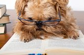 Serious dog in the glasses read a book poster