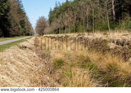 Natural Ditch Ith Variety Of Plants And Moss