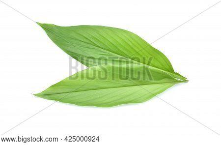 Fresh Leaves Of Turmeric (curcuma Longa) Ginger Medicinal Herbal Plant Isolated On White Background,