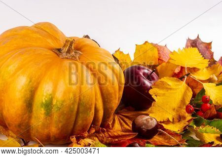 Autumn Art Composition - Varied Dried Leaves, Pumpkins, Fruits, Rowan Berries On White Background. A