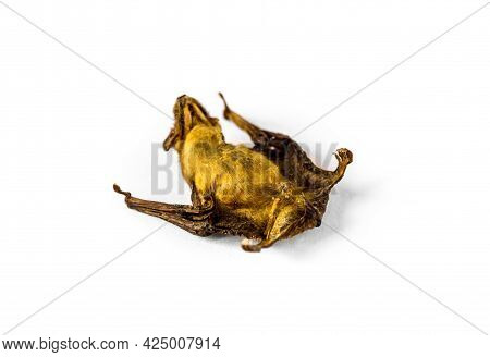 Baby Bat Dried Isolated On A White Background