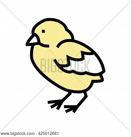 Chick Bird Color Icon Vector. Chick Bird Sign. Isolated Symbol Illustration