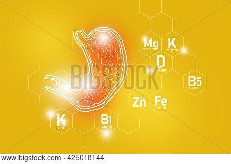 Essential Nutrients For Stomach Health Including Zinc, Kalium, Vitamin B5, Ferrum. Design Set Of Mai