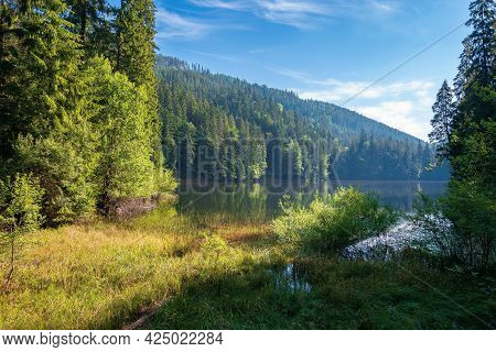Landscape With Mountain Lake In The Morning. Peaceful Summer Landscape Coniferous Forest Around The