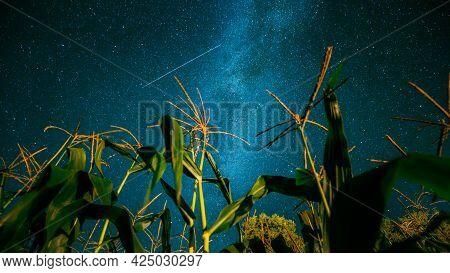 Bottom View Of Night Starry Sky With Milky Way From Green Maize Corn Field Plantation In Summer Agri