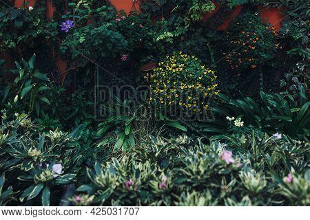 Neat And Well-kept Flower Garden, Herbs. Background.