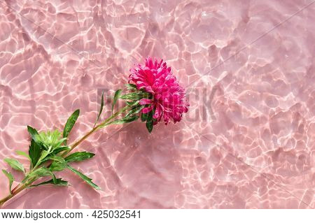 Pink Chrysanthemum Flower On Water Surface With Ripples And Sunlight Reflections. Beauty Spa, Relaxa