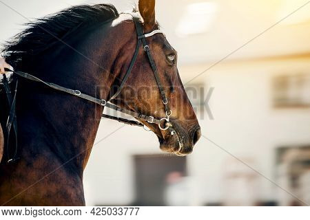 Portrait Of A Sports Horse In The Bridle In The Arena. Horse Muzzle Close Up. Portrait Stallion In T