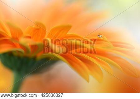 Beautiful macro shot of magic flowers.Border art design. Magic light.Extreme close up macro photography.Conceptual abstract image.Orange and White Background.Fantasy Art.Creative Wallpaper.Beautiful Nature Background.Amazing Spring Flowers.Water Drop.