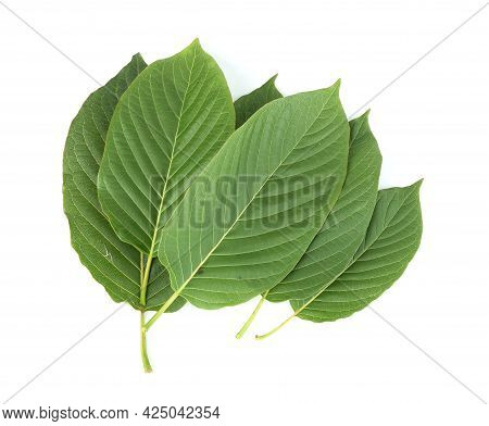 Top View Of Mitragyna Speciosa,kratom Leaves Isolated On White Background