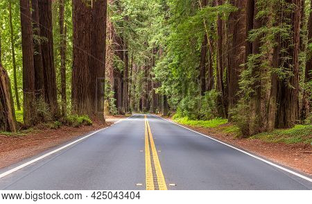 Scenic Route In Navarro River Redwoods State Park, California