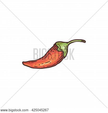 Hand Drawn Pod Of Red Chili Pepper Color Engraving Vector Illustration Isolated.