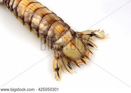 Tail Top View Of A Mantis Shrimp Or Stomatopods, A Carnivorous Marine Crustacean Also Called