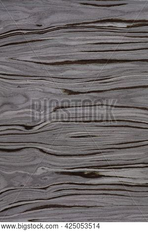 Fossil Forest Veneer Background, Texture In Strict Grey Color For Your Interior.