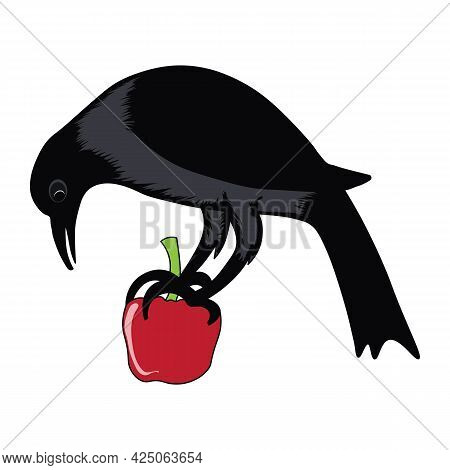 Indian Raven Crow Sitting On An Apple Vector Illustration