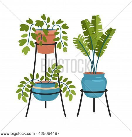 Exotic Indoor Plants On Tripod Stands. Interior Curly And Tropical Flowers In Fashionable Flowerpots