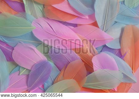 Feathers Background.feathers Texture. Variegated Motley Feathers Surface Beautiful Natural Bright Ba