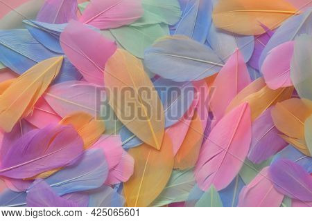 Multicolored Feathers Background In Pastel Colors.feathers Texture. Variegated Motley Feathers Surfa