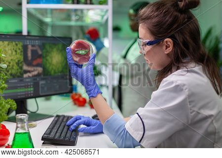 Chemist Woman Analyzing Vegan Beef Meat For Biochemistry Experiment. Biologist Researcher Examining