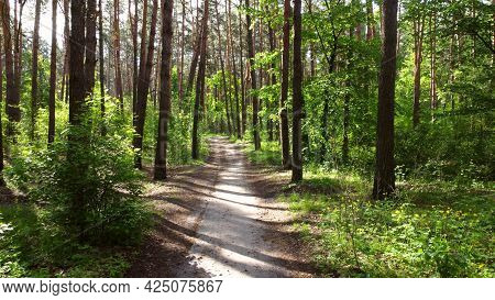 Green Bright Forest And Dirty Road Footpath. Trees, Bushes, Green Leaves,