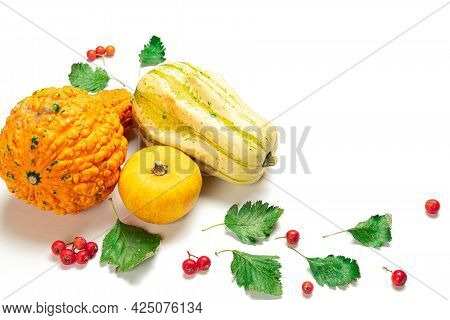 Thanksgiving Holiday. Autumn Natural Food, Harvest With Orange Pumpkin, Fall Dried Leaves, Rowan Ber