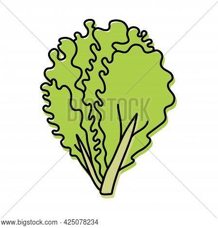 Lettuce. Vegetable Sketch. Color Simple Icon. Hand Drawn Vector Doodle Illustration