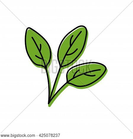 Spinach Herb. Vegetable Sketch. Color Simple Icon. Hand Drawn Vector Doodle Illustration