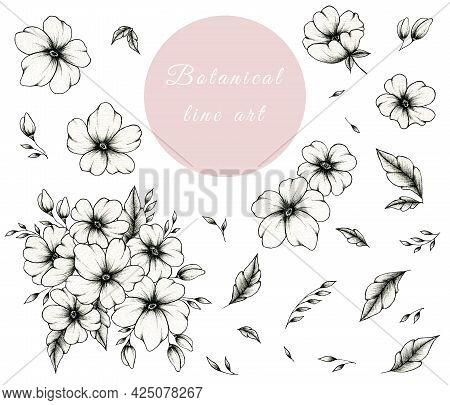 Hand Drawn Ink Botanical Line Art Collection Isolated On White, Vintage Set Of Floral Elements Great