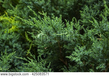 A Green Plant In A Forest.high Quality Photo