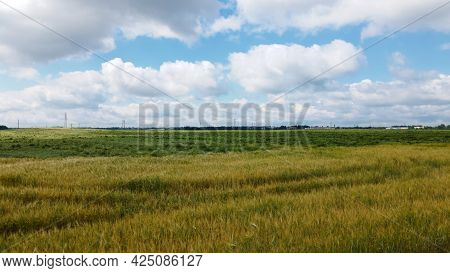 Lodged Cereals After Storm And Hail. Ripening Rye. Has Suffered From Bad Weather. Aerial Photography