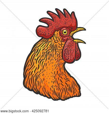 Crowing Cock Rooster Head Color Line Art Sketch Engraving Vector Illustration. T-shirt Apparel Print