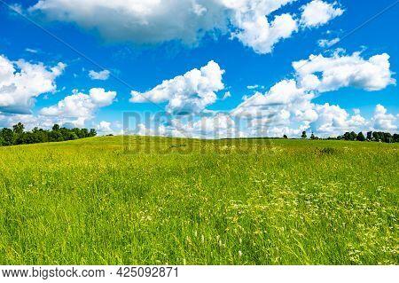 Landscape Field Meadow In Summer On A Sunny Day