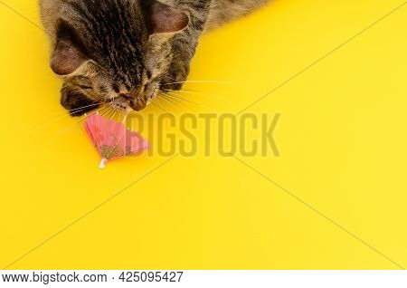 Kitten Playing With Shaker Umbrella On Yellow Background. Beautiful Kitten On Colorful Background.