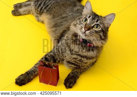 Portrait Of Kitten With Gift Bag. Kitten Lying On Yellow Table With Small Red Gift Bag.