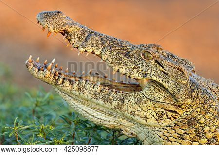 Portrait of a large Nile crocodile (Crocodylus niloticus) with open jaws, Kruger National Park, South Africa