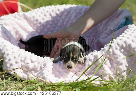 Dog In The Crib. Young Puppy Sitting In A Crib, On A Soft Blanket. Beautiful Cute Puppy, Pet Animal.