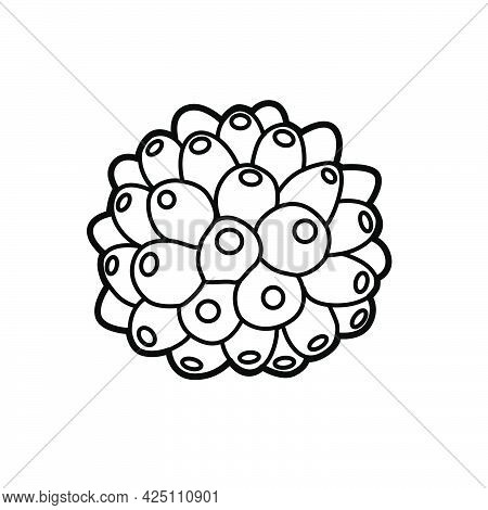 Sea Sponge Object Coloring Book Linear Drawing Isolated On White Background