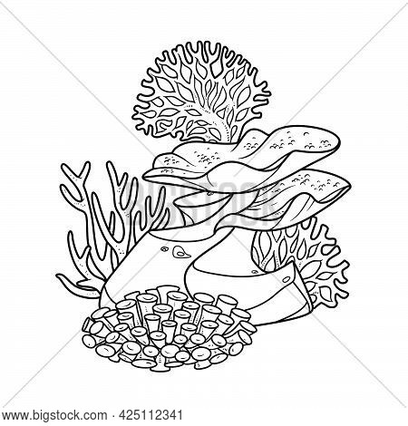 Sponges, Anemones And Coralls On Sandstone Coloring Book Linear Drawing Isolated On White Background