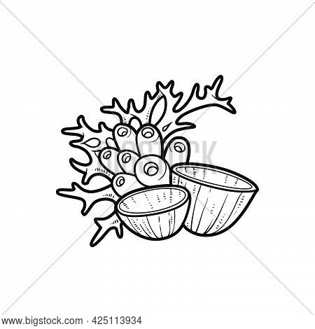 Various Sponges And Corals Object Coloring Book Linear Drawing Isolated On White Background