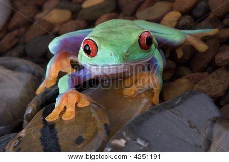 Frog Climbing Over Wet Rocks