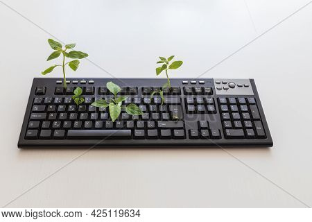 Black Computer Keyboard After Lockdown. Green Plants Grow From The Keyboard. Pc Keyboard On A White
