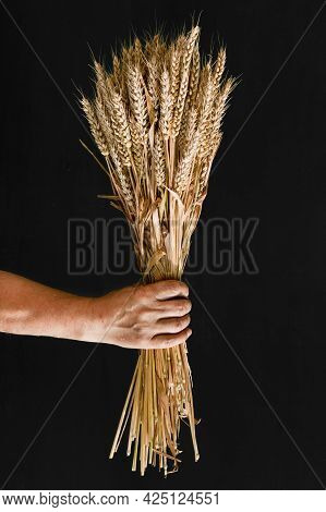 Sheaf Of Wheat In A Man's Hand On A Black Background