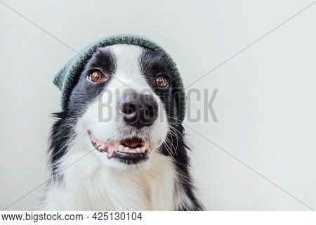 Funny Portrait Of Cute Smiling Puppy Dog Border Collie Wearing Warm Knitted Clothes Hat Isolated On