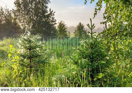 Beautiful Summer Landscape With Forest And Trees. Spring Forest With Fog At Sunrise