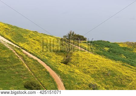 Landscape In The Mountains In The North Of Israel. View Of The Golan Heights In Israel.