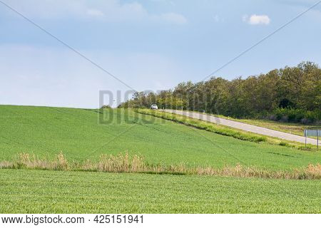 Lonely Tree Standing In A Green Field. Rural Landscape For Postcard And Background.