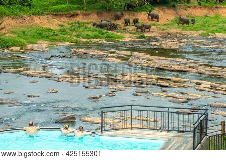 Tourist Looking To Herd Of Elephants In Pinnawala The Nursery And Captive Breeding Ground For Wild A