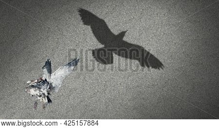 Concept Of Renewal And Afterlife Or Reincarnation Life After Death Idea As A Dead Bird Casting A Sha
